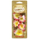 Bahama Scented Necklase Tropical Breeze